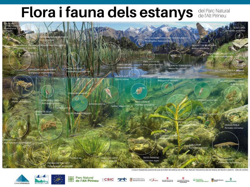 Flora i fauna dels estanys