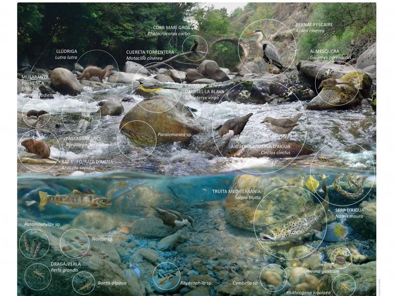 Flora i fauna dels rius