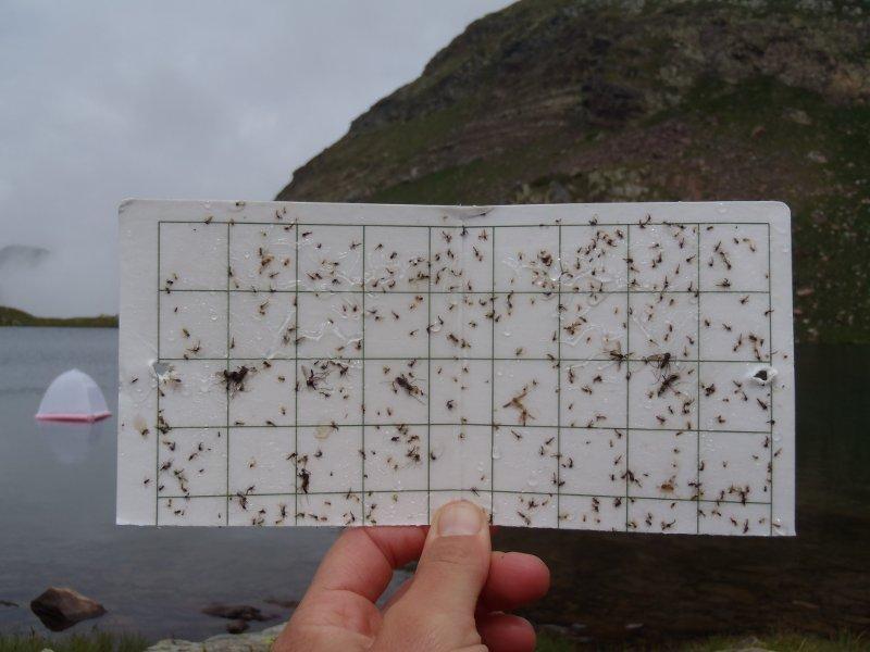 Material recollit amb les trampes d'emergència d'insectes